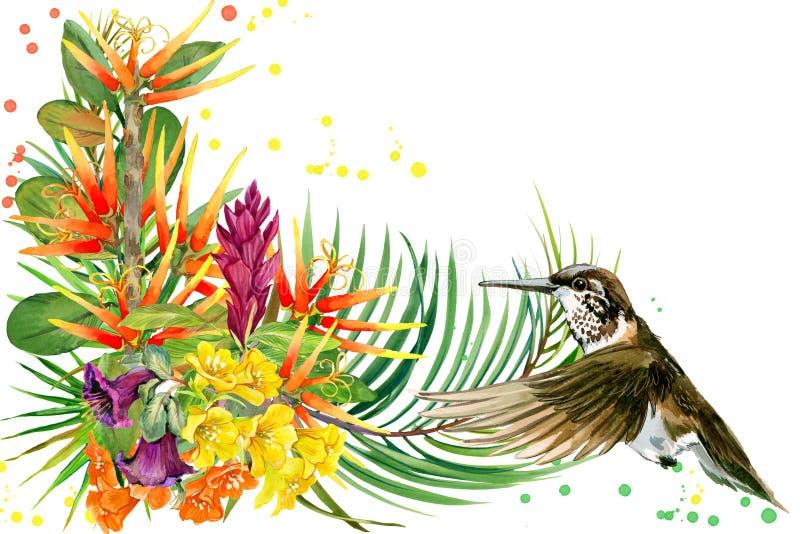 pianta, uccello e fiori della giungla hummingbird illustrazione dell'acquerello della foresta pluviale illustrazione di stock