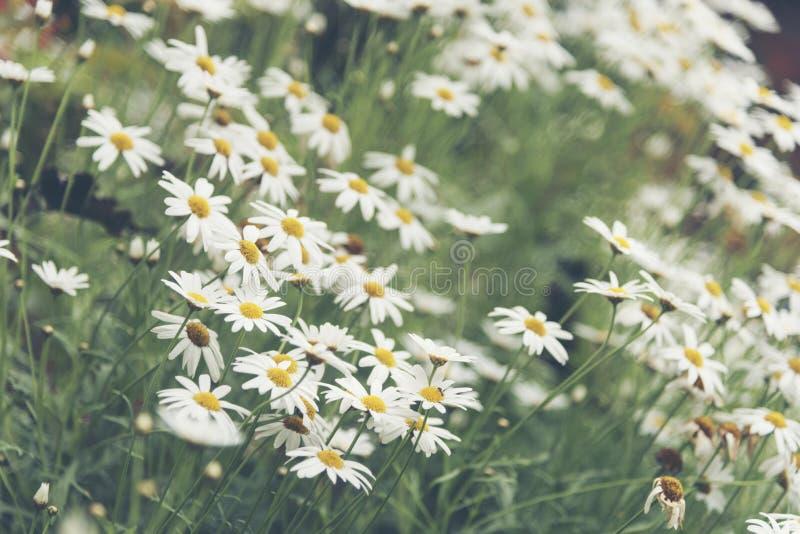 Pianta variopinta tropicale del fiore con colore bianco fotografia stock