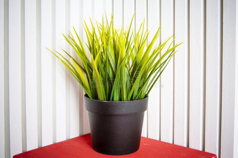 Pianta in vaso artificiale decorativa, erba in vaso di fiore I verdi rearistic di plastica dell'ufficio non devono preoccuparsi p immagini stock libere da diritti