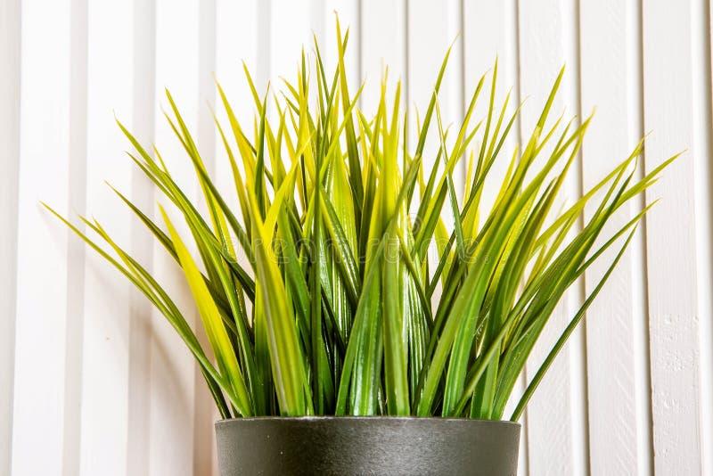 Pianta in vaso artificiale decorativa, erba in vaso di fiore Su un fondo di legno bianco I verdi rearistic di plastica dell'uffic immagini stock
