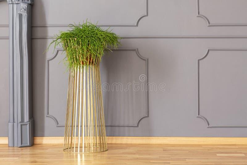 Pianta in vaso verde fresca disposta sul supporto dell'oro del metallo nella stanza grigia fotografia stock libera da diritti