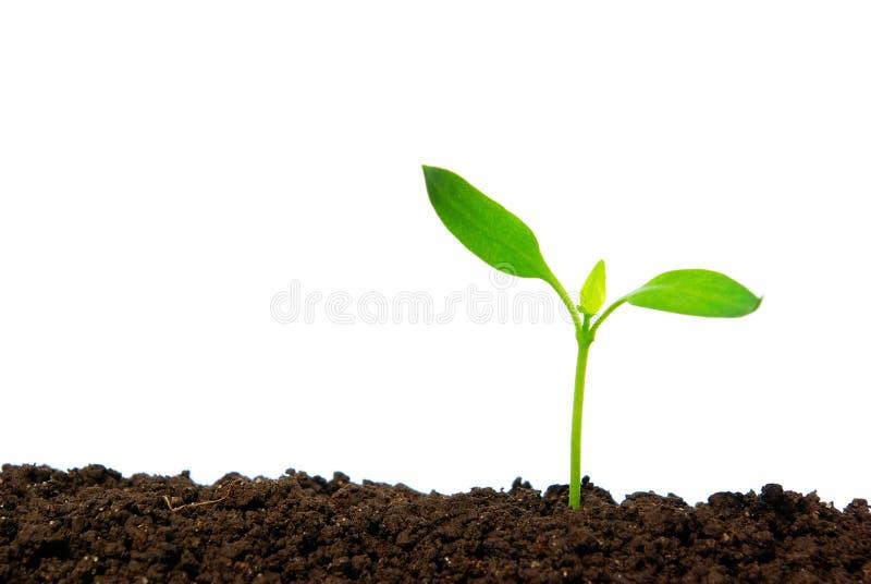 Pianta verde immagine stock immagine di conservazione for Pianta da pavimento verde