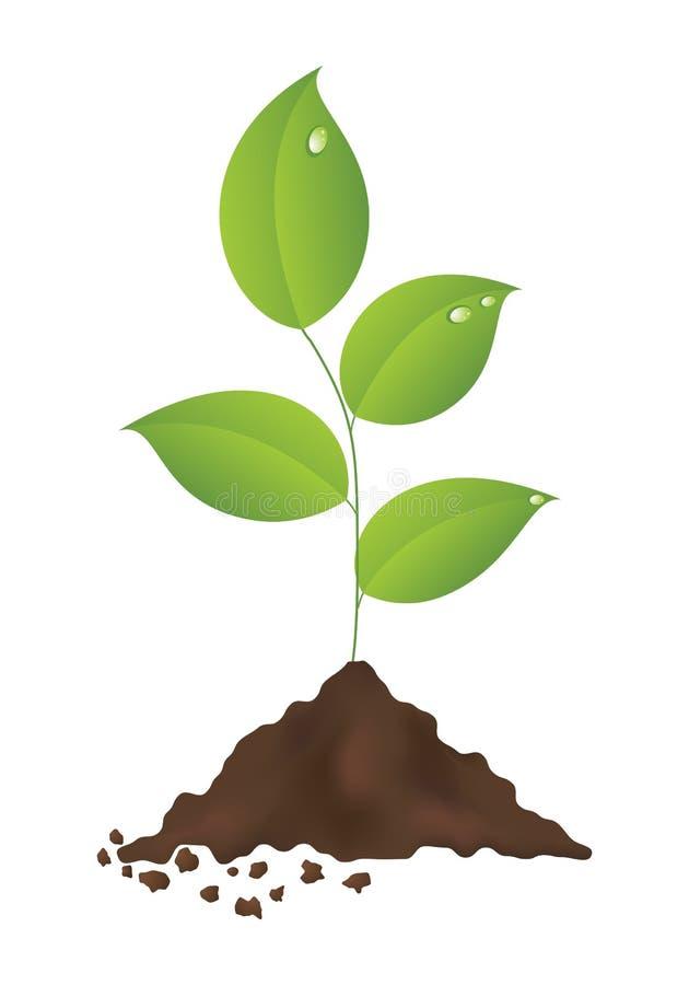 Pianta verde illustrazione di stock