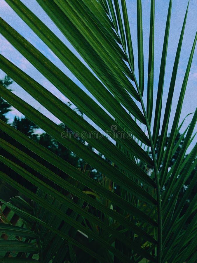 Pianta verde fotografie stock