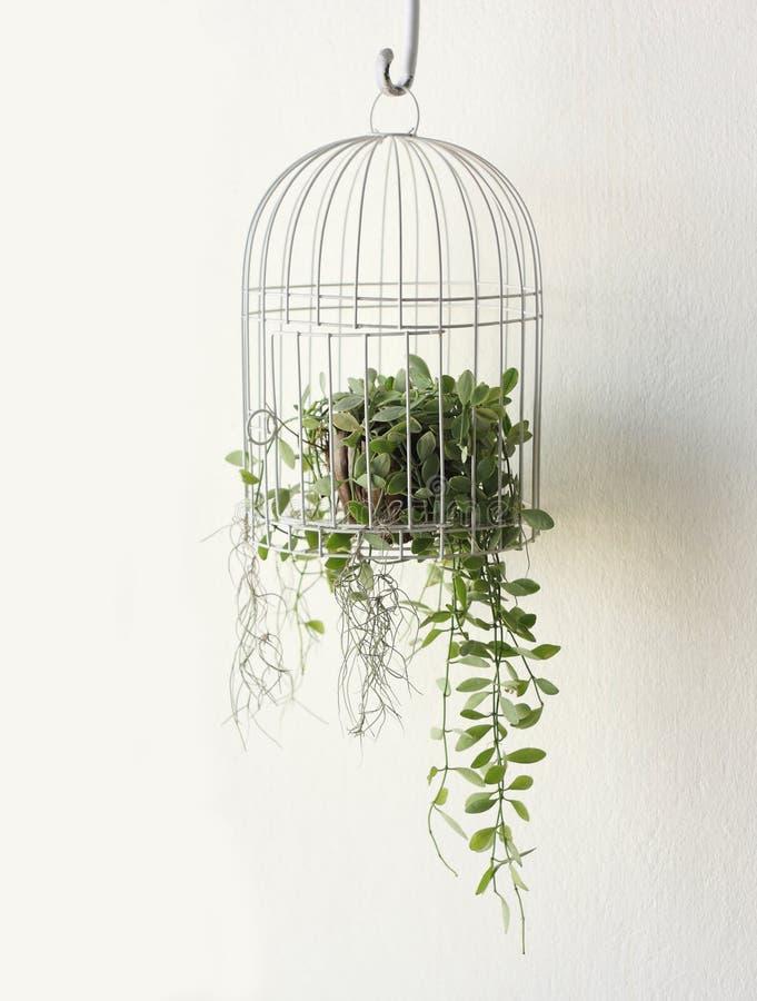 Pianta verde in birdcage su fondo bianco immagine stock