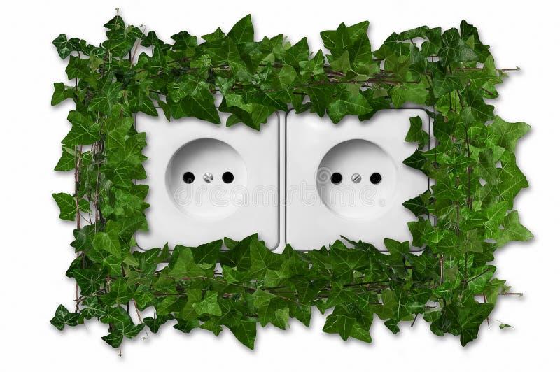 Pianta verde che cresce dallo sbocco di parete immagine stock libera da diritti