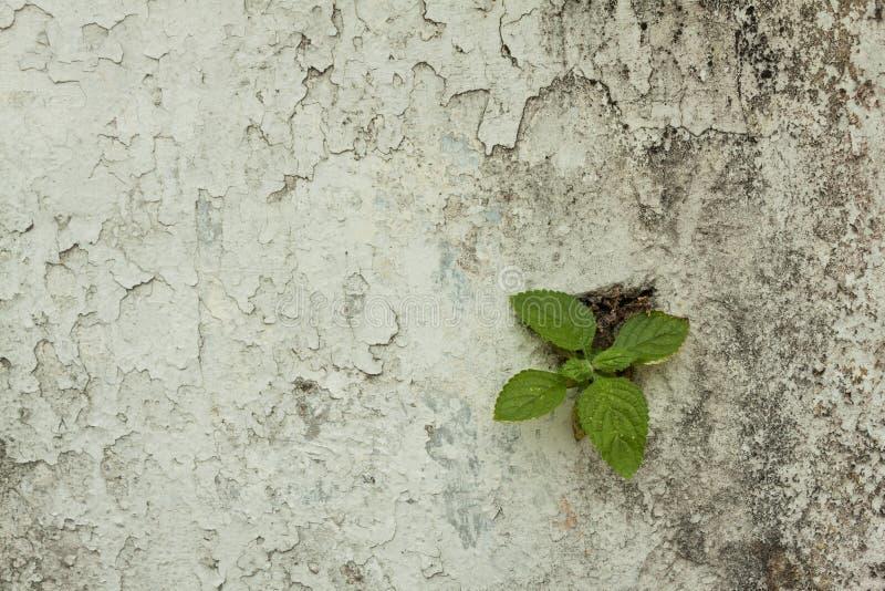 Pianta verde che cresce sulla vecchia parete immagine for Pianta da pavimento verde