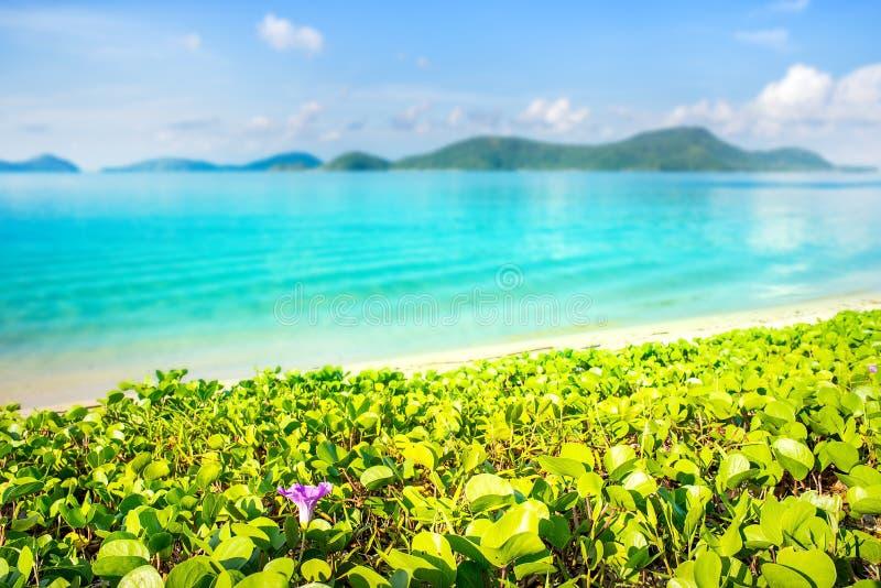 Pianta verde con la spiaggia vaga e mare blu in cielo blu fotografie stock libere da diritti