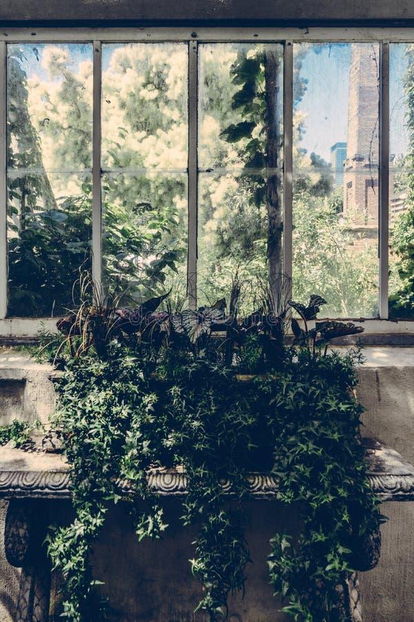 Pianta verde della foglia vicino al vetro di finestra fotografia stock libera da diritti