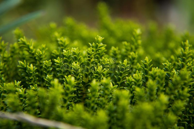 Pianta verde della primavera fotografia stock libera da diritti