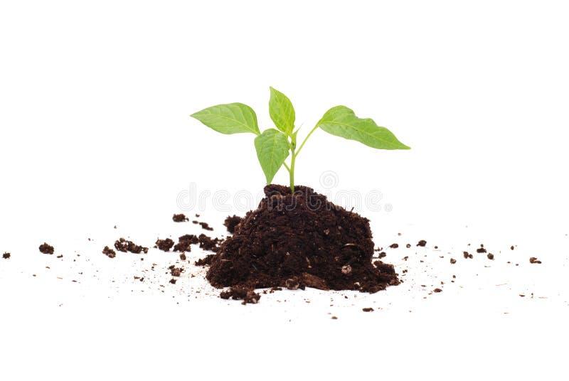 Pianta verde per il migliore ambiente immagine stock libera da diritti