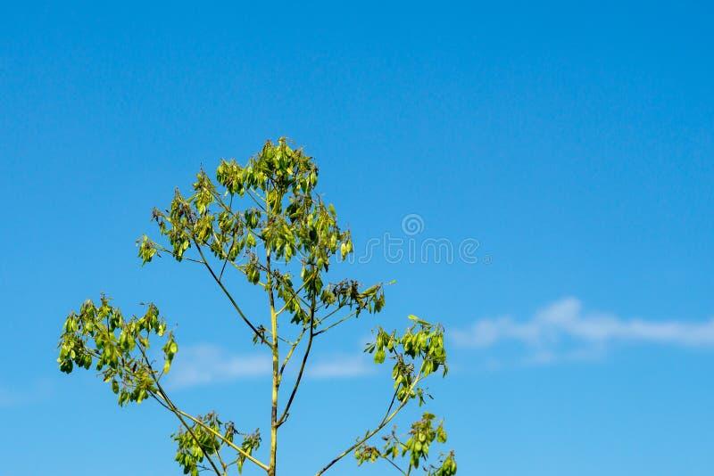 Pianta verde sui precedenti del cielo luminoso di estate immagini stock libere da diritti