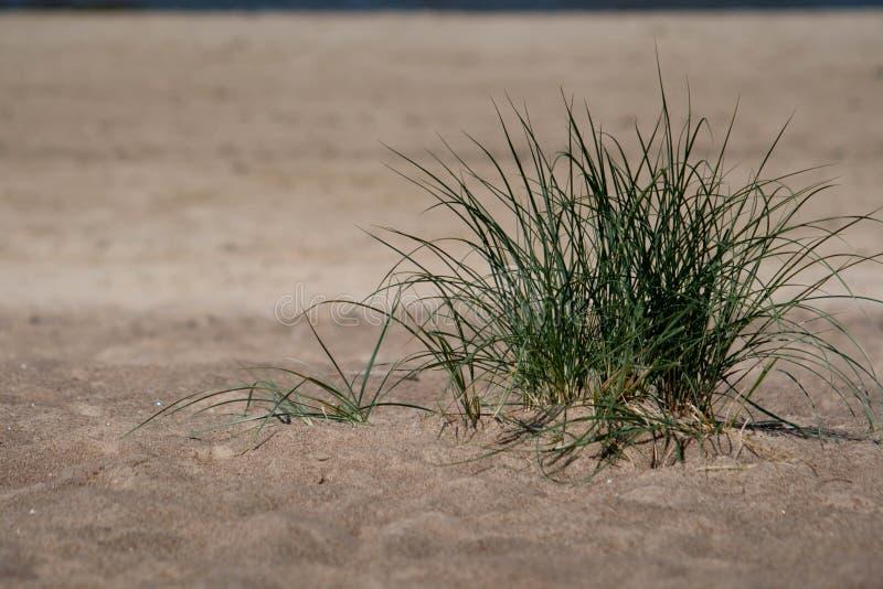 Pianta verde sulla sabbia della spiaggia con il mare fotografia stock libera da diritti