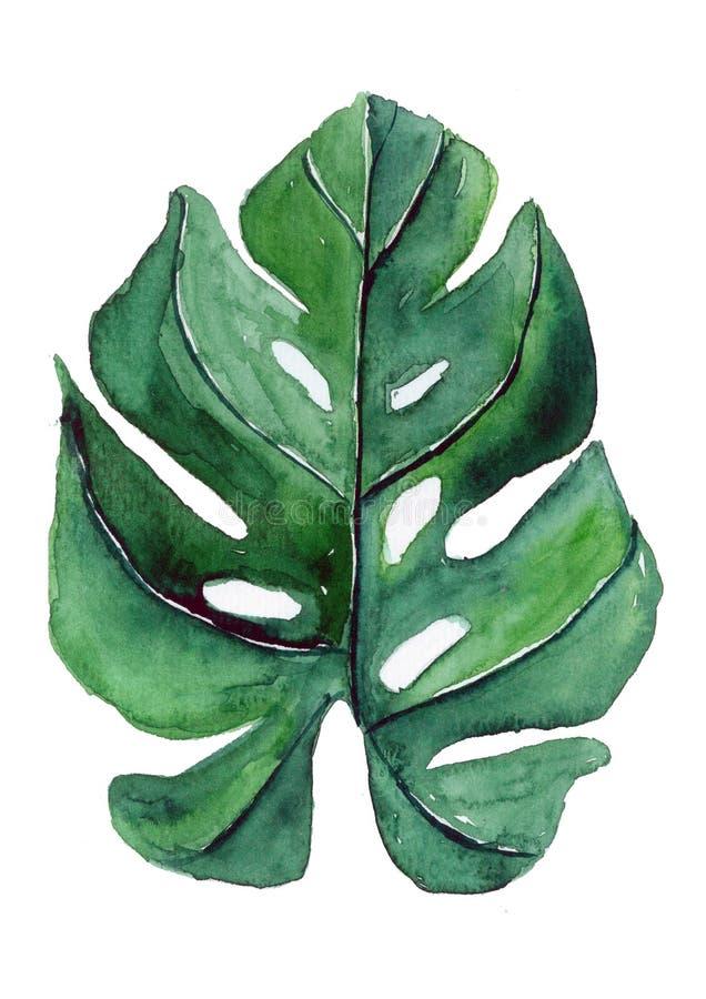 Pianta verde tropicale della foglia fotografia stock