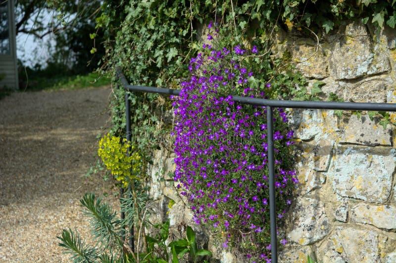 Pianta viola reale Parete di pietra & corrimano fotografia stock