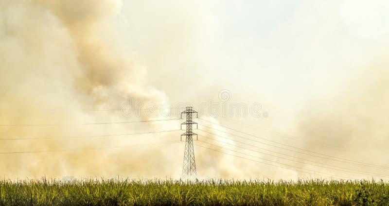 Piantagione del fuoco della canna da zucchero fotografia stock libera da diritti