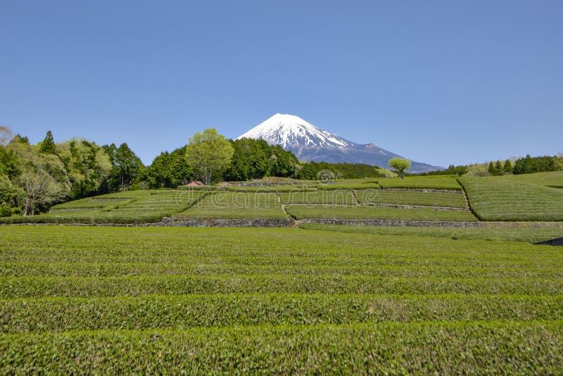 piantagione della montagna Fuji-san e di tè verde del terrazzo nel giorno del sole a Fujinomiya, Shizuoka, Giappone fotografia stock