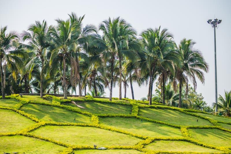 Piantagione della noce di cocco nel parco reale del ratchaphruek della flora fotografia stock