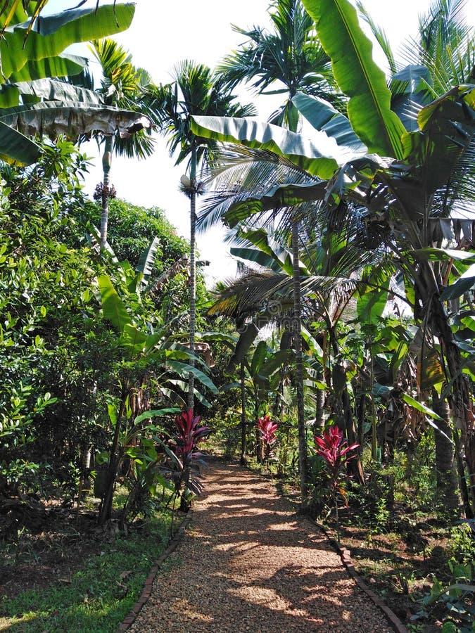 Piantagione della spezia in Goa, India fotografie stock libere da diritti