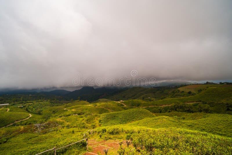 Piantagione di tè con i cieli nuvolosi immagine stock libera da diritti