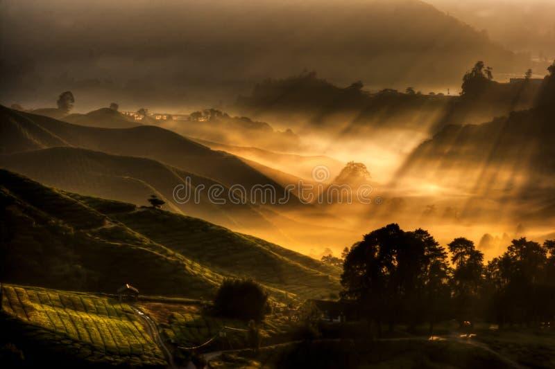 Piantagione di tè dell'altopiano di Cameron fotografie stock libere da diritti