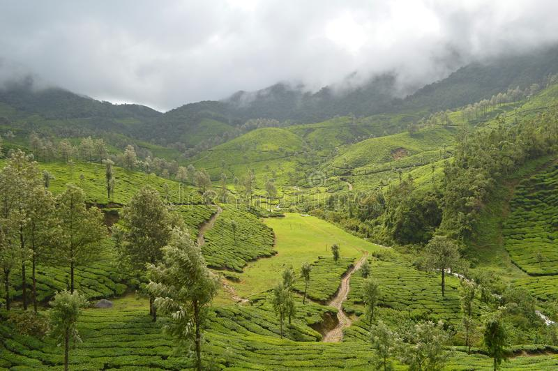 Piantagione di tè in Munnar, Kerala immagini stock