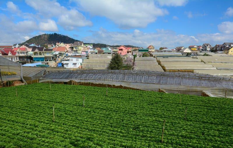 Piantagione di verdure in Lam Dong, Vietnam immagine stock libera da diritti