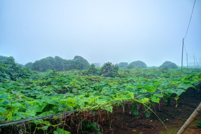 Piantagione di verdure nel Vietnam fotografia stock
