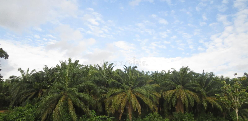 Piantagione lungo la strada principale Malesia fotografie stock libere da diritti