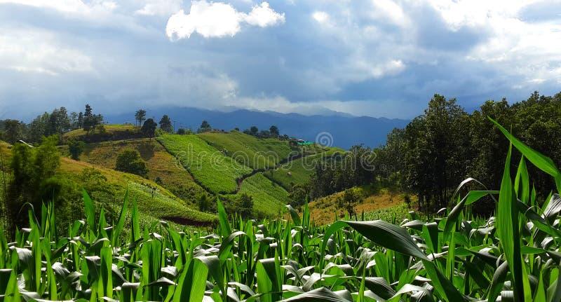 Piantagione unita verde ed il cielo blu immagine stock libera da diritti