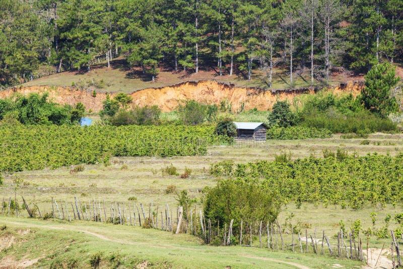 Piantagione vicino alla montagna di Langbiang, provincia di Lam Dong, Vietnam fotografia stock