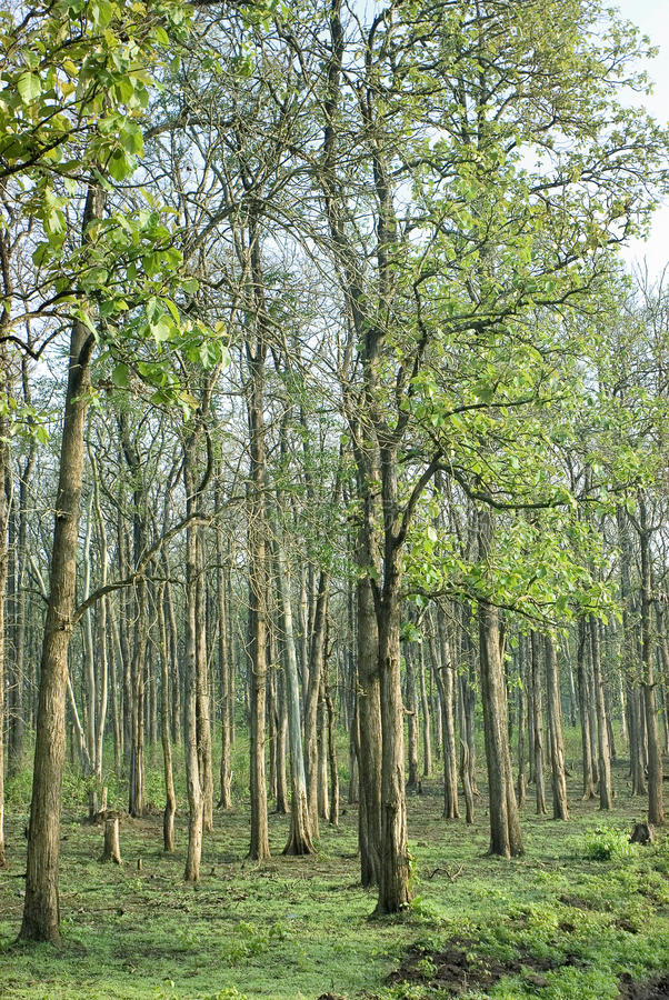 Piantagioni dell'gestione-albero della foresta fotografie stock libere da diritti