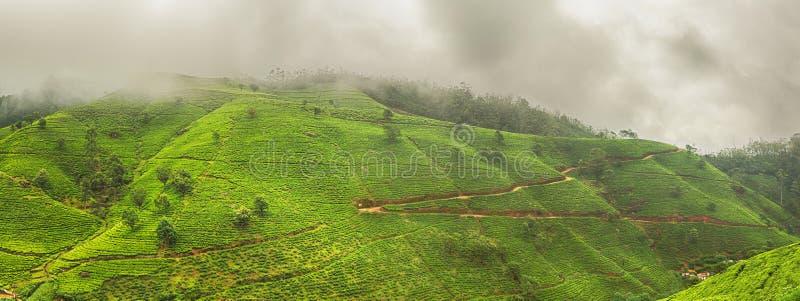 piantagioni di tè La Sri Lanka Panorama fotografie stock libere da diritti