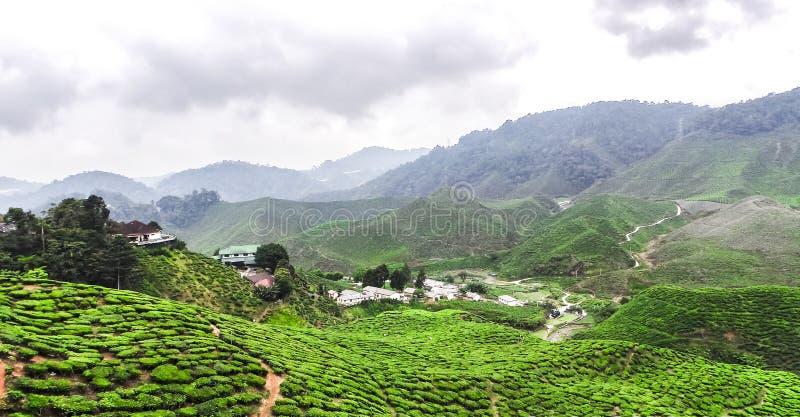 Piantagioni di tè in Malesia fotografia stock libera da diritti
