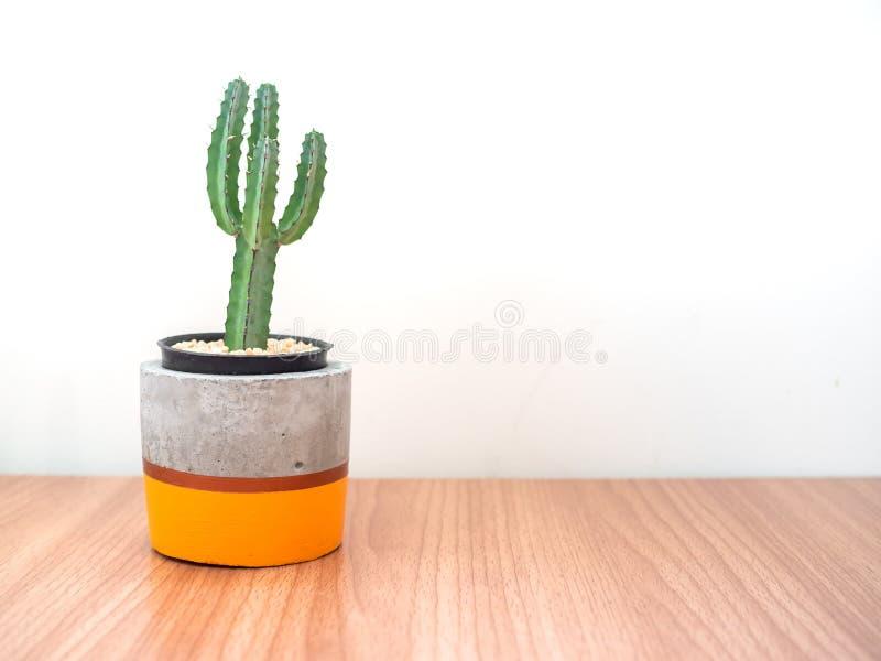 Piantatrice concreta moderna variopinta con le piante del cactus Vaso concreto dipinto per la decorazione domestica fotografia stock libera da diritti