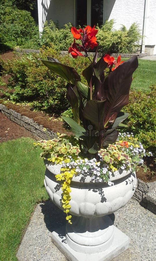 Download Piantatrice di fioritura immagine stock. Immagine di giardino - 55356807