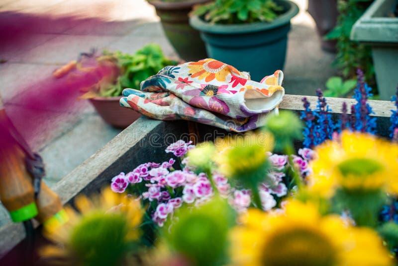 Piantatrice di recente piantata con gli strumenti di giardinaggio Hobby e svago Giardinaggio di estate immagini stock libere da diritti