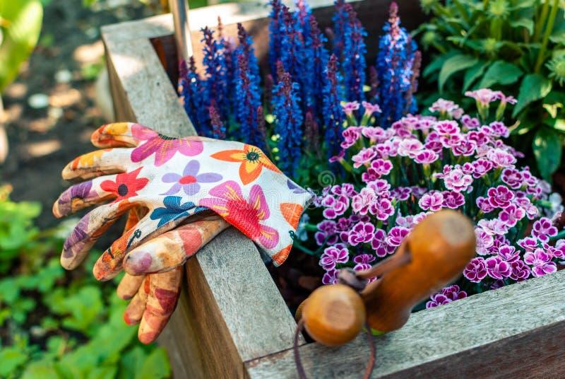 Piantatrice di recente piantata con gli strumenti di giardinaggio Hobby e svago Giardinaggio di estate fotografia stock