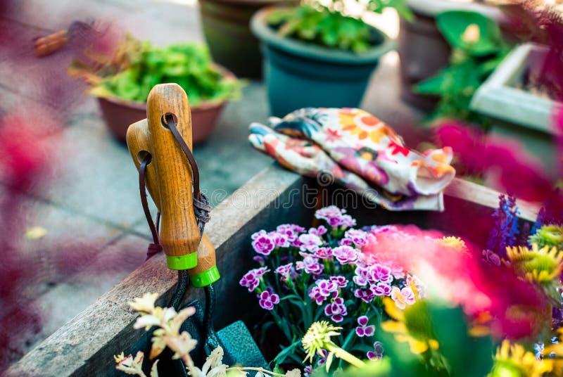 Piantatrice di recente piantata con gli strumenti di giardinaggio Hobby e svago Giardinaggio di estate fotografia stock libera da diritti
