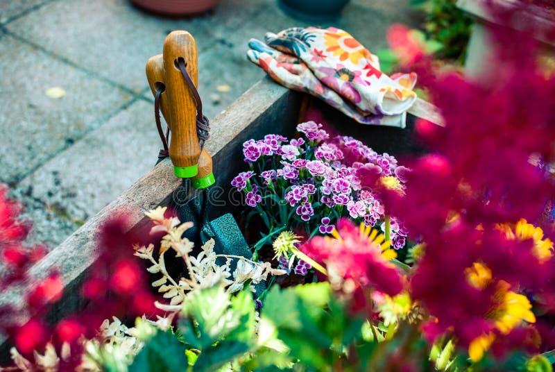 Piantatrice di recente piantata con gli strumenti di giardinaggio Hobby e svago Giardinaggio di estate immagine stock libera da diritti
