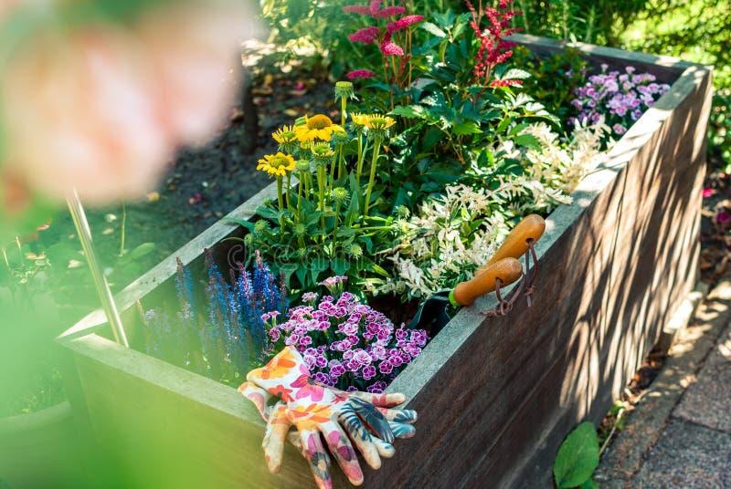 Piantatrice di recente piantata con gli strumenti di giardinaggio Idee della piantatrice Concetto di giardinaggio fotografia stock