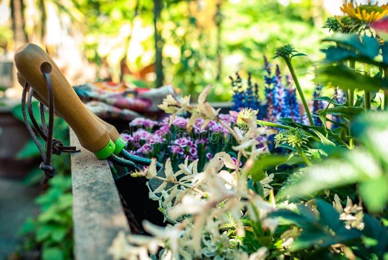 Piantatrice di recente piantata con gli strumenti di giardinaggio Idee della piantatrice Concetto di giardinaggio immagini stock