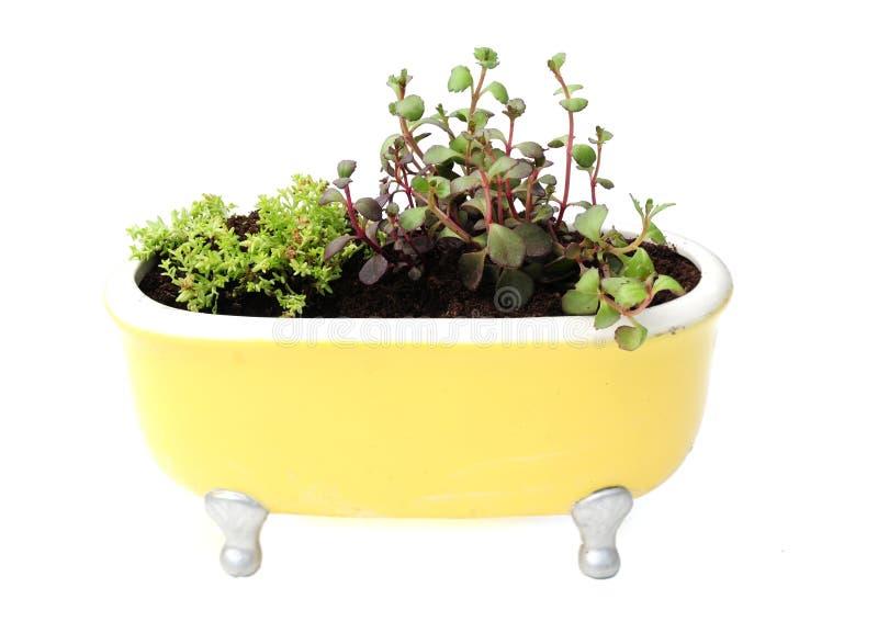Piantatrice gialla del bagno fotografia stock