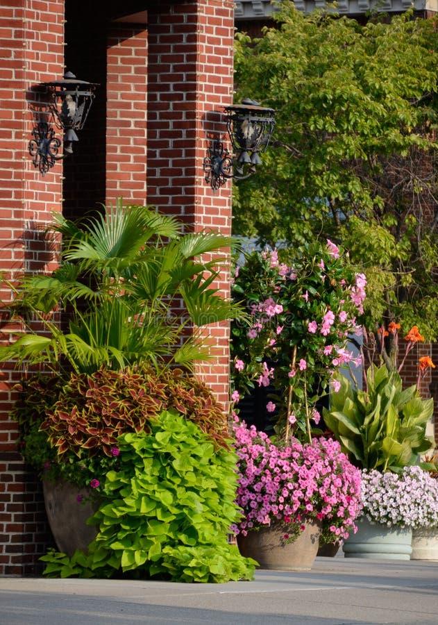 Piantatrici floreali con la palma, il coleus, la vite di patata dolce, il giglio di canna, il mandevilla e la petunia immagine stock