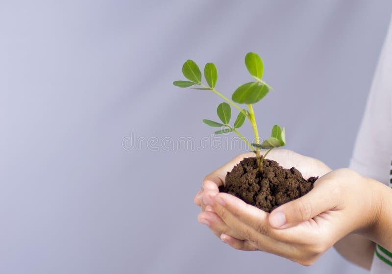 Piantatura degli alberi per terra immagine stock libera da diritti