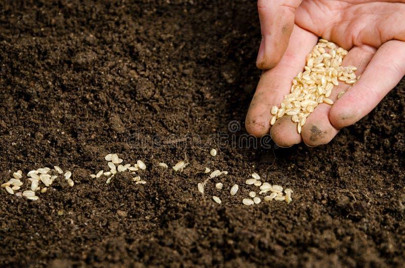Piantatura dei semi in terreno fotografia stock