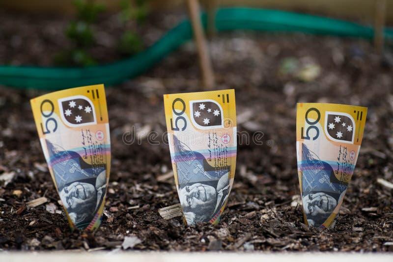 Piantatura dei soldi australiani nel letto del giardino immagini stock libere da diritti