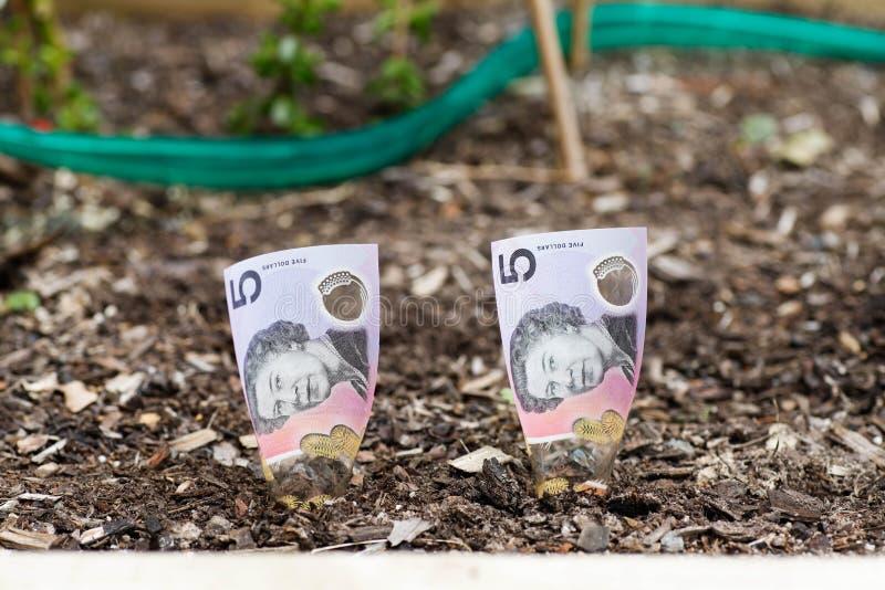 Piantatura dei soldi australiani nel letto del giardino fotografie stock libere da diritti