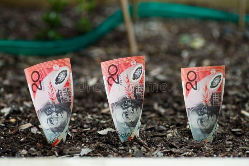 Piantatura dei soldi australiani nel letto del giardino fotografie stock