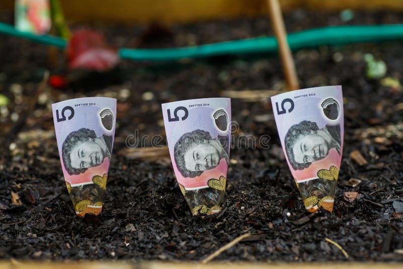 Piantatura dei soldi australiani nel letto del giardino immagini stock